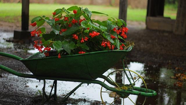 květiny v kolečku